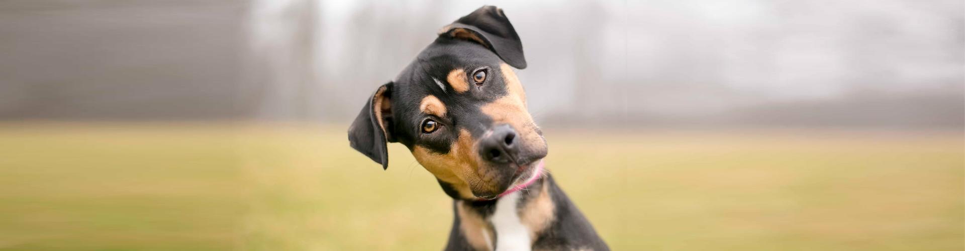 Crematorio de mascotas Servicio Incineración de mascotas y otros animales para particulares y veterinarios
